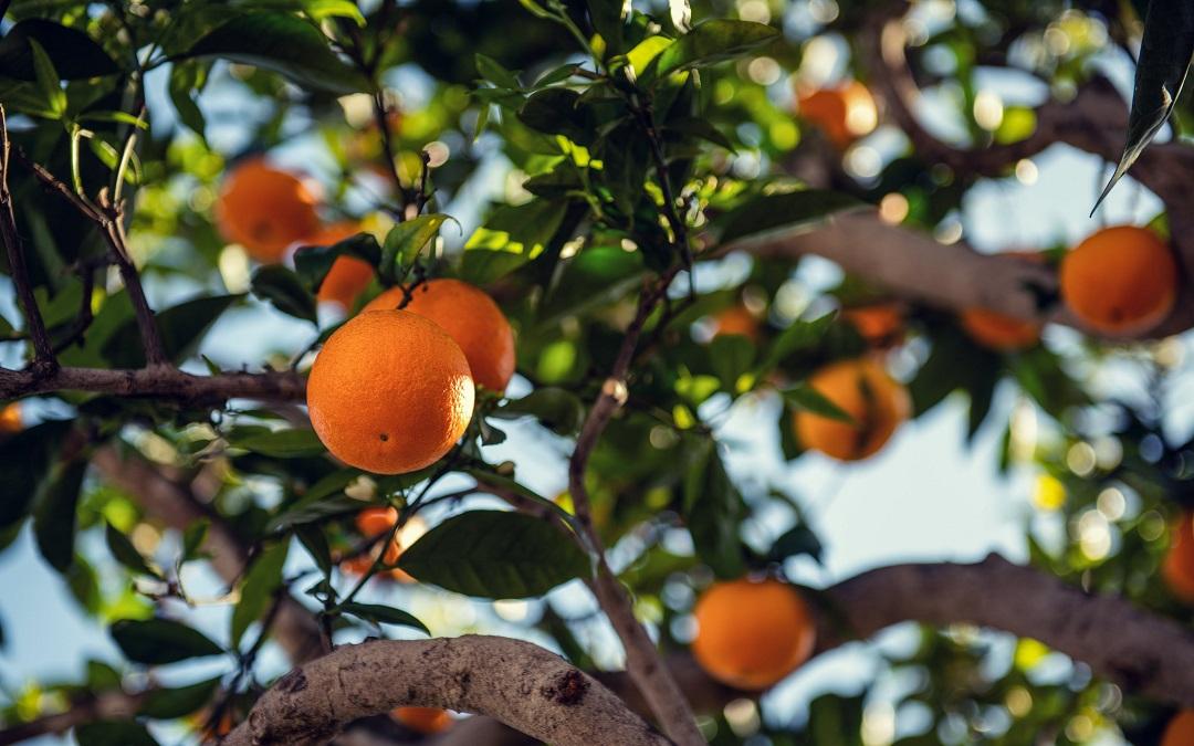 Misión 12: Producción de alimentos suficiente, sostenible, inclusiva